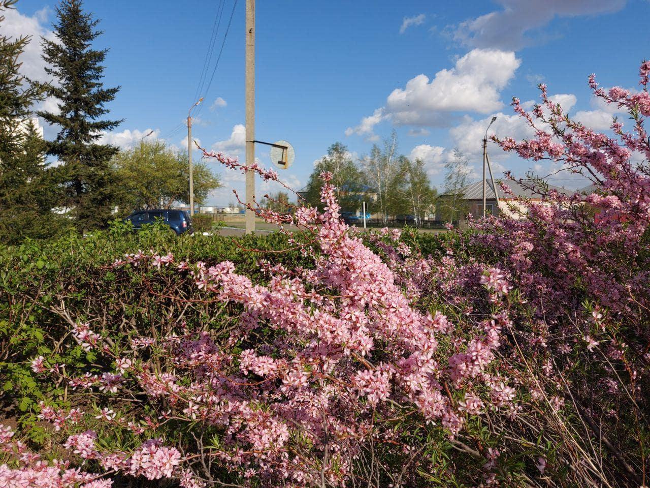 Парк цветы-min